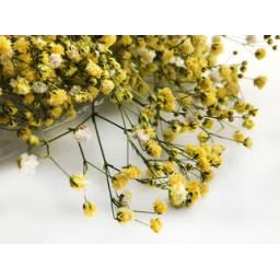 Çiçek doğal cipso pk:50 gr sarı
