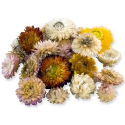 Çiçek doğal saman çiçeği rengarenk pk:30gr